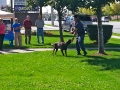 k-9-search-and-resuce-demonstration-02