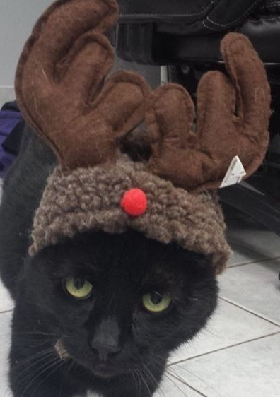 Black Cat with Antlers